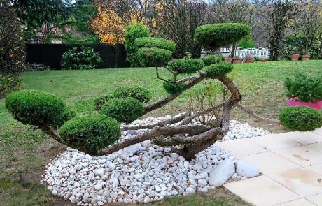 Taille de formation juniperus en nuage